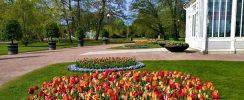 tulips, house